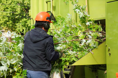 man inserting cut branches into a machine