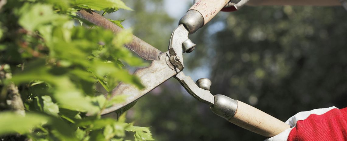 tree pruning in alberta