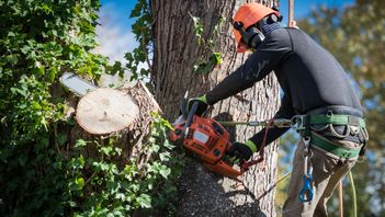 an arborist removing hazardous limbs from a damaged tree after assessment