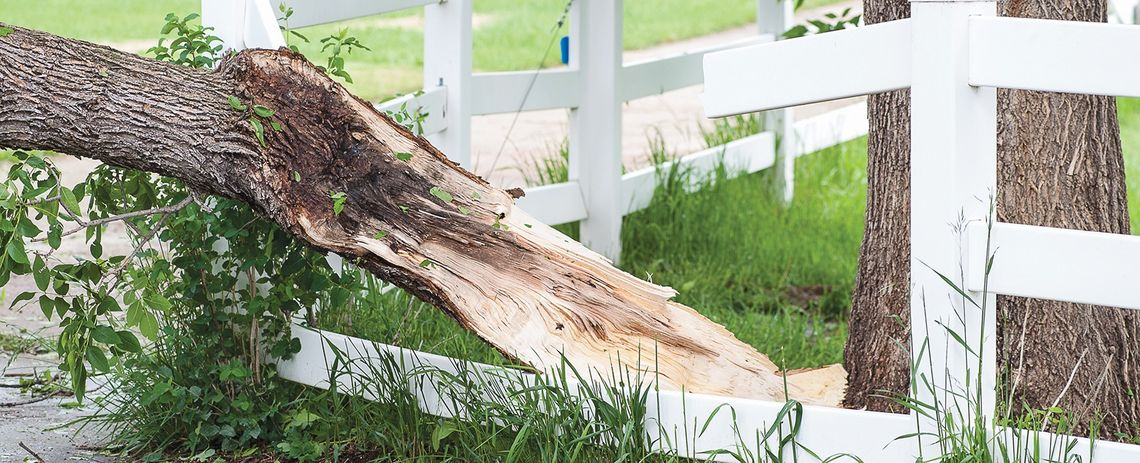 All_Season_Tree_Service: storm damage tree removal Edmonton