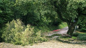 a downed tree and other debris after a summer storm in Edmonton, Alberta