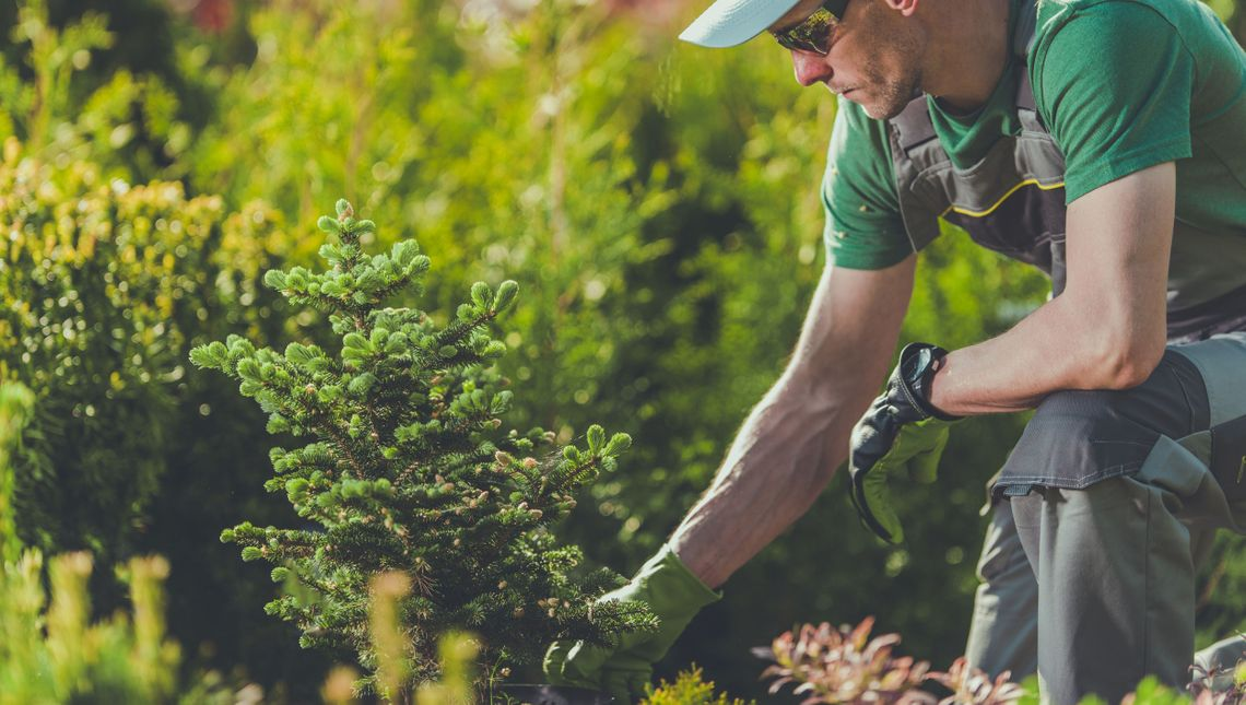 man planting a shrubs