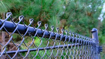 conifer trees growing close to a chain link fence
