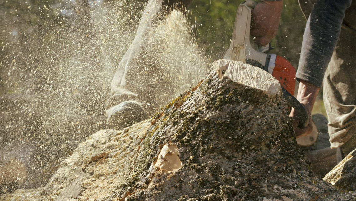 An arborist is using a chainsaw to cut down a tree before grinding what is left of the stump.