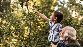 grandfather lifting child up to pick an apple from a tree in his backyard