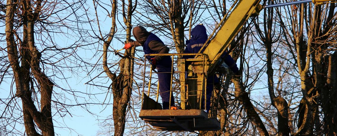 All Season Tree Service: professional arborist on a boomtruck pruning a large tree in the winter