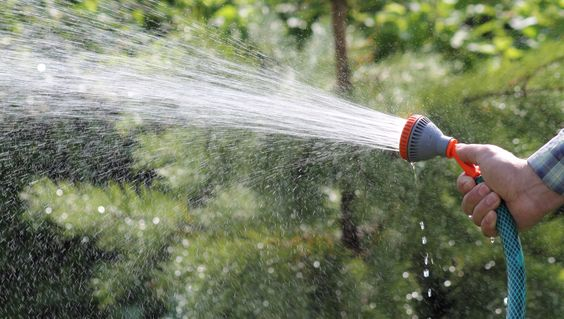 Put down that hose! Why you should not be watering your yard's tree stumps.