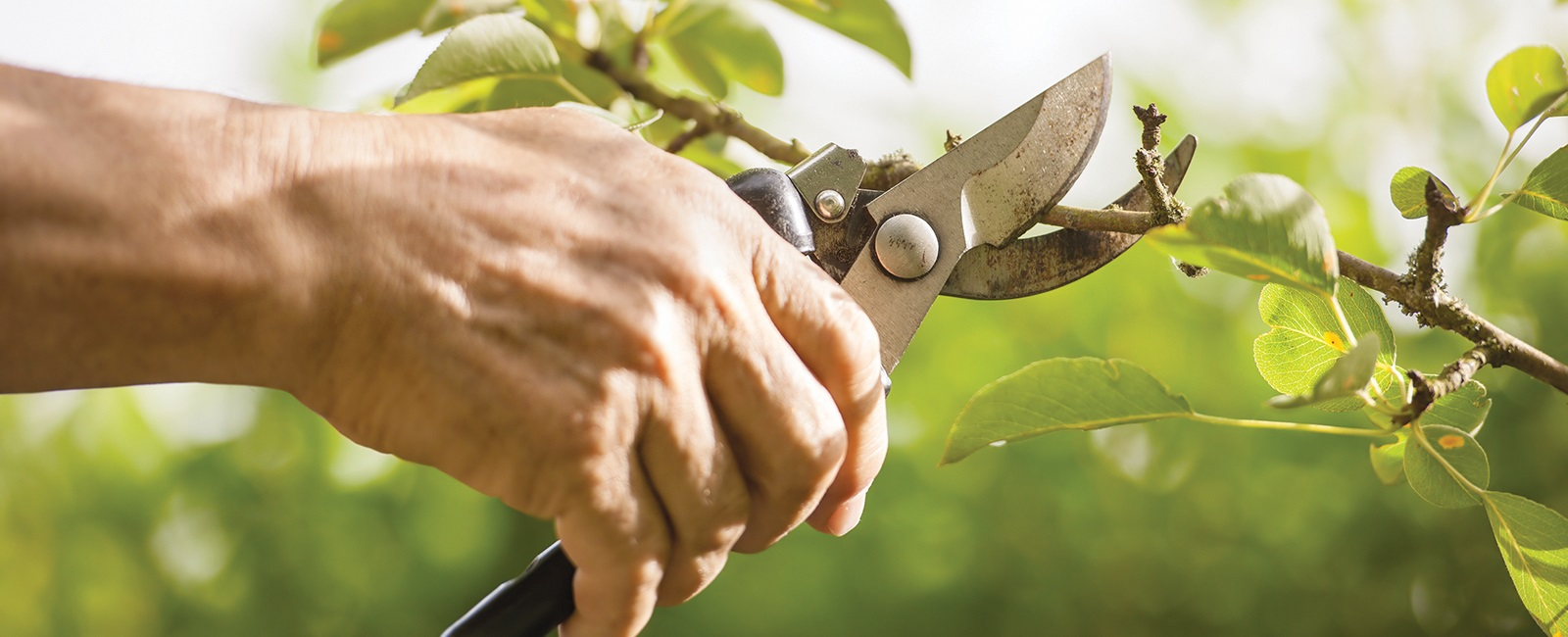 All_Season_Tree_Service: Tree Pruning