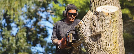All_Season_Tree_Service: Man using chainsaw for tree removal