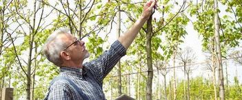 Take care of your trees with all season tree service in Edmonton