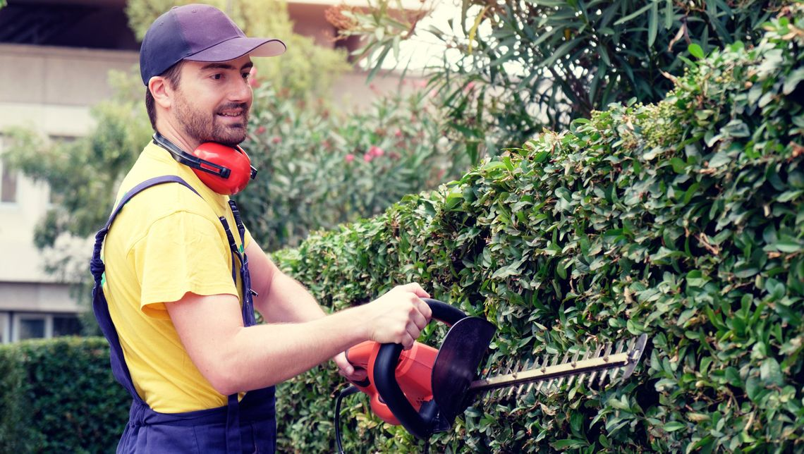 one of our workers carefully shaping a row of hedges